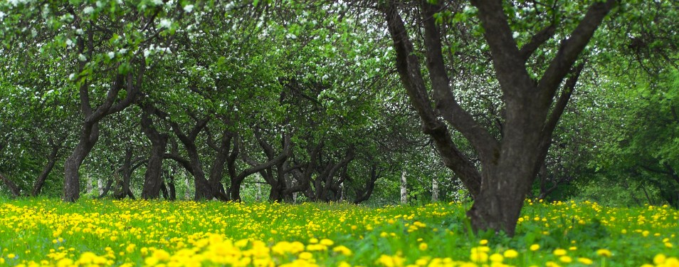 Баранівські сади